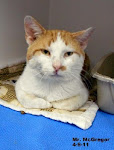 8/14/11 Space Crisis Grayson Humane S. Ky Shelter/ All Kitties in Danger. Please adopt or rescue