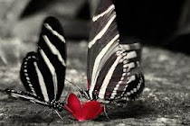 menemukan ketentraman yang hakiki menghangatkan dinginnya hati ini