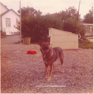 Belair family dog Lady