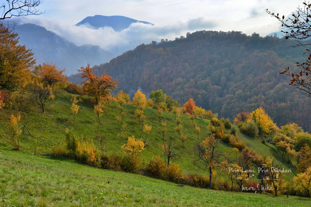 cerna-valley-prisacina-view