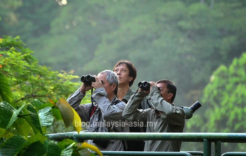 Birdwatching in Sabah Borneo
