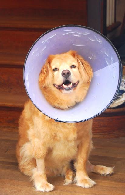 Opie, my dog