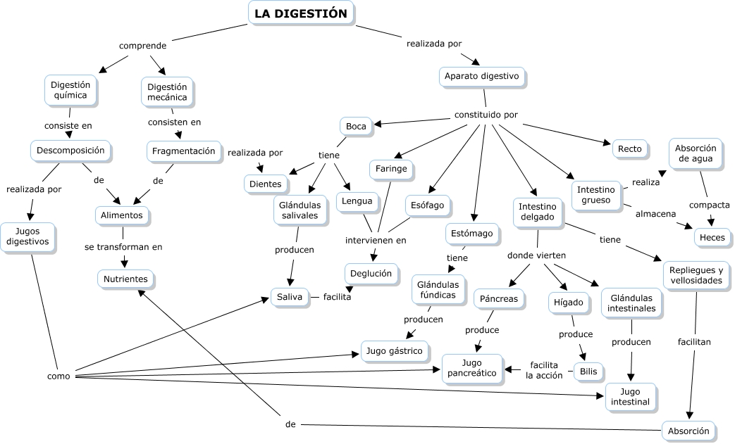 Biología Creativa: Mapa Conceptual Anatomía y Fisiología del Aparato ...