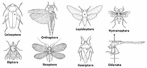 Chave para identificação de insetos
