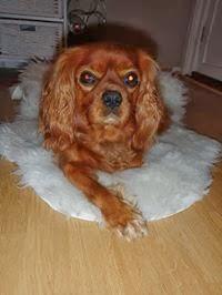 Hunden vår