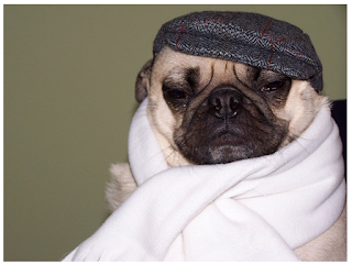 foto de cachorro pug