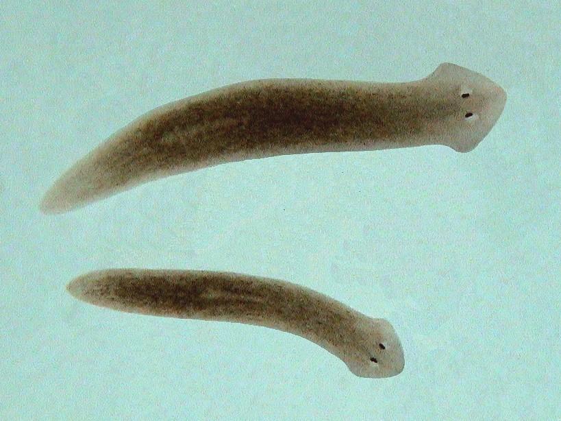 Como sofrer a inspeção em parasitas em SPb