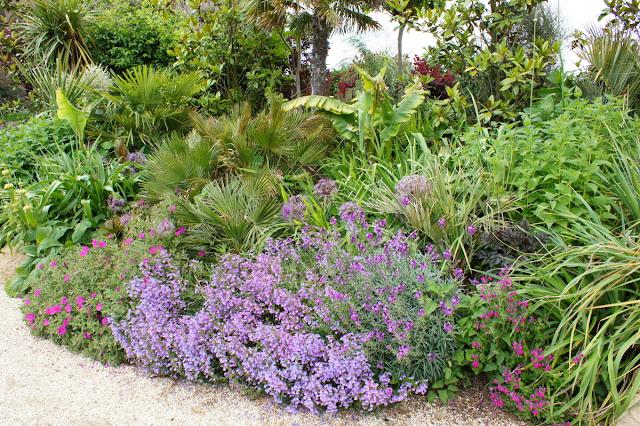 fleur a planter en mars excellent dahlia collerette en mlange with fleur a planter en mars. Black Bedroom Furniture Sets. Home Design Ideas