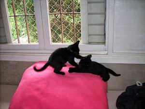 Lina e Lola