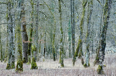 Image of a forest in winter without snow