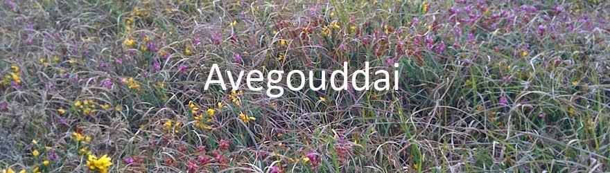 Avegouddai