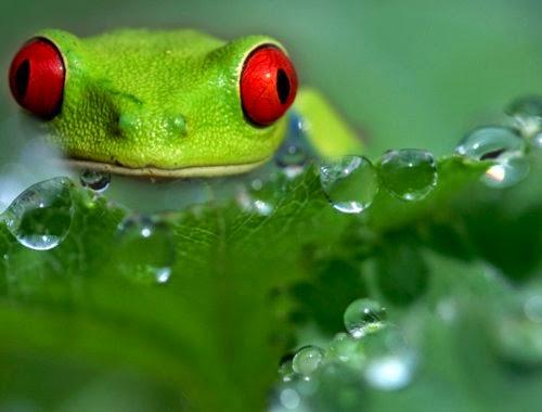 14-Wil-Mijer-Frog-Macro-Photography-www-designstack-co