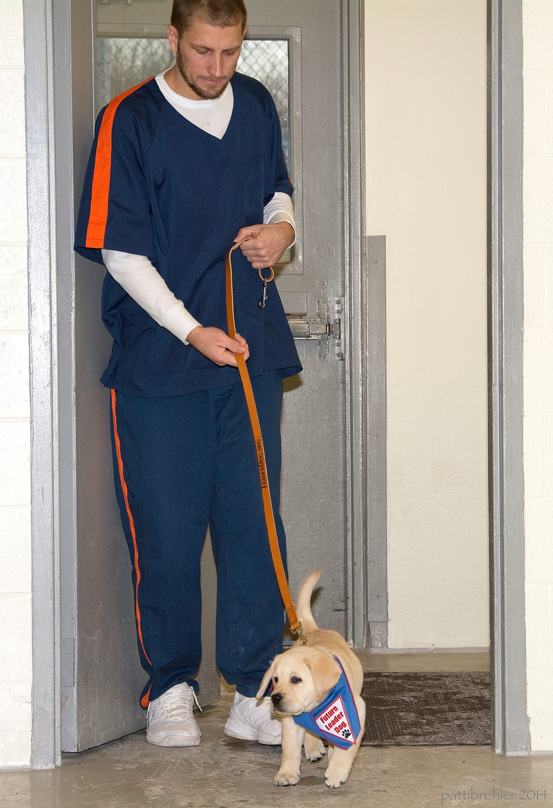 A man dressed in blue shirt and pants with orange stripes and white tennis shoes comes through a door toward the camera. He is looking down at a small yellow Lab puppy that he has on a brown leather leash.  The puppy is wearing a blue bandana with a white triangle patch with red letters that say Future Leader Dog and a black paw print.