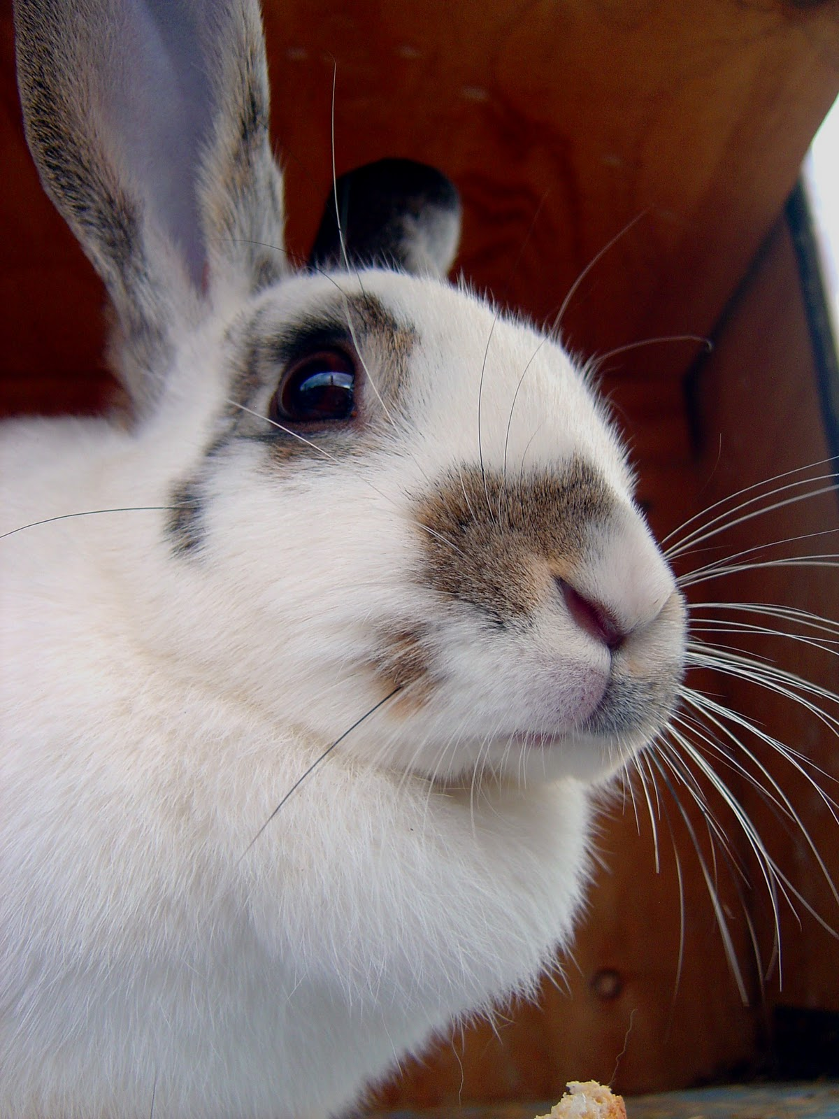 Fairy Castle Farm: Bunny Care and Rare Old English Spot ...