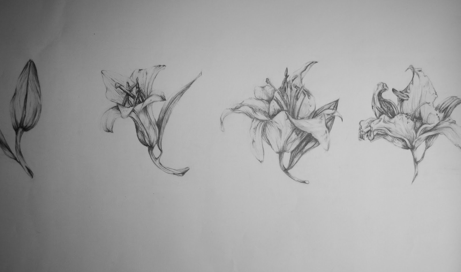 Lily Pencil Drawings Pencil Drawing of Lilies a1