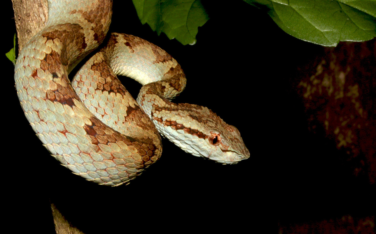 snake bites What do i need to know about a snake bite most snakes are not venomous some snakes inject venom that can act as a poison in your body even venomous snakes often bite without injecting venom the venom may cause severe skin and tissue damage after several hours or days a snake bite is a serious.