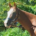 finn horse riding