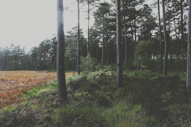 quiet-forest-nature-summer-story-ringwood-todaymyway