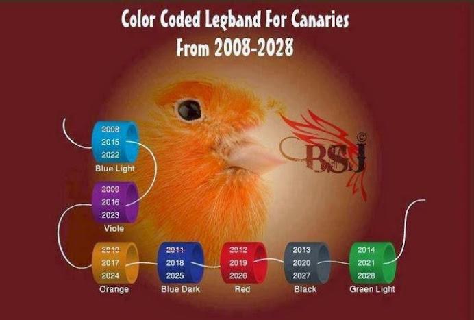 Color de las Anillas desde 2008-2028