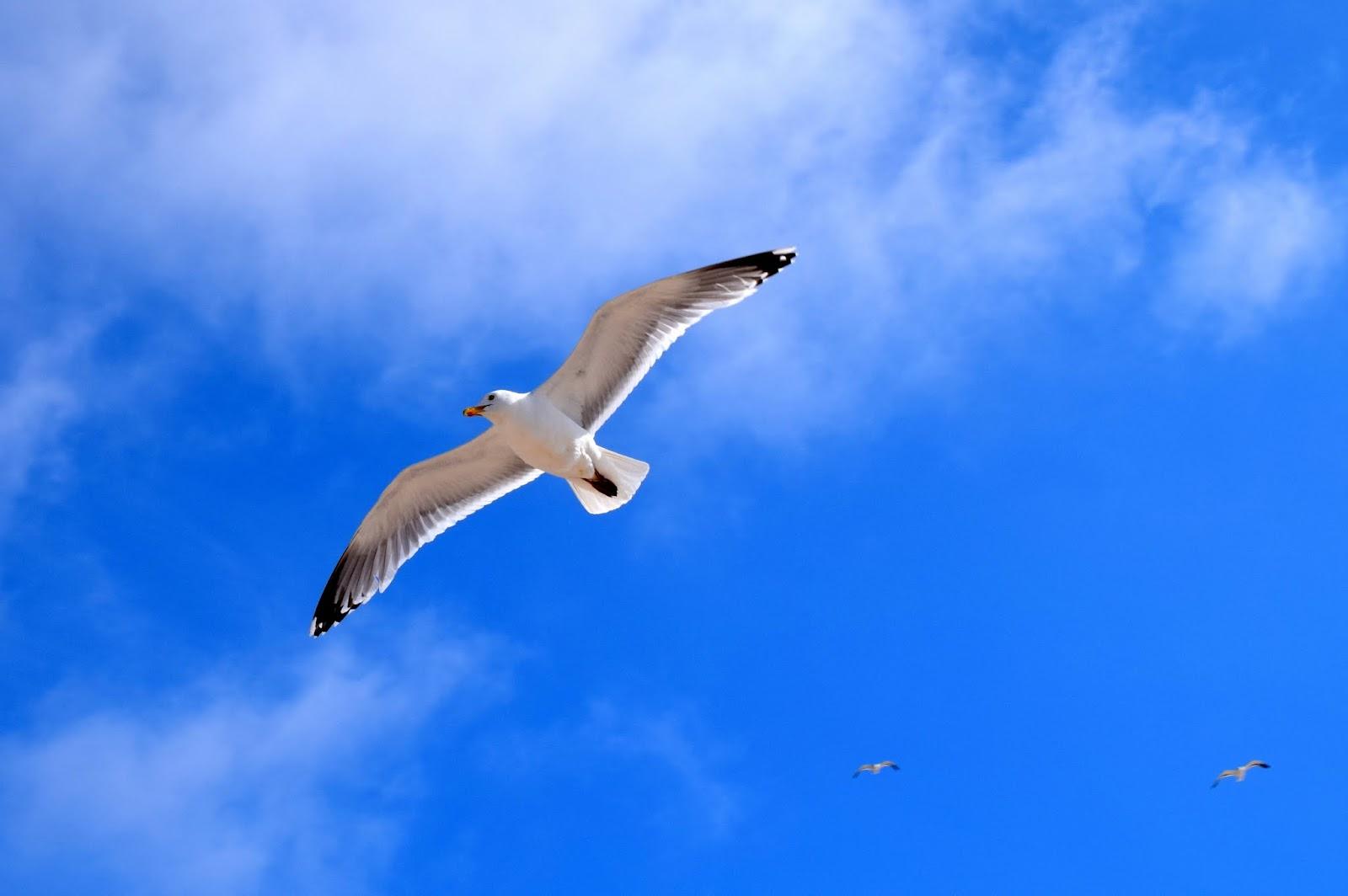 Sommer auf Sylt: Möwe am Himmel
