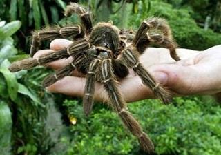 Dikira Menyiksa Istrinya, Pria Ini Ternyata Memukuli Laba-laba