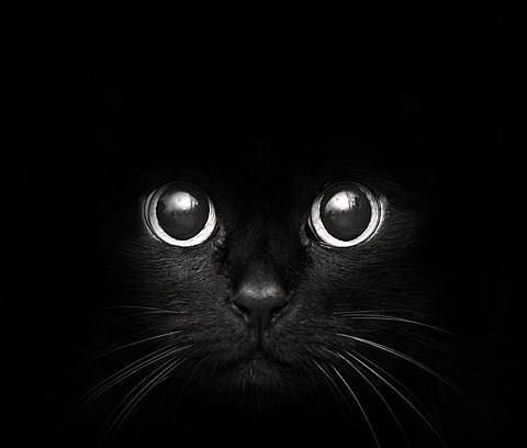 Los Gatos.