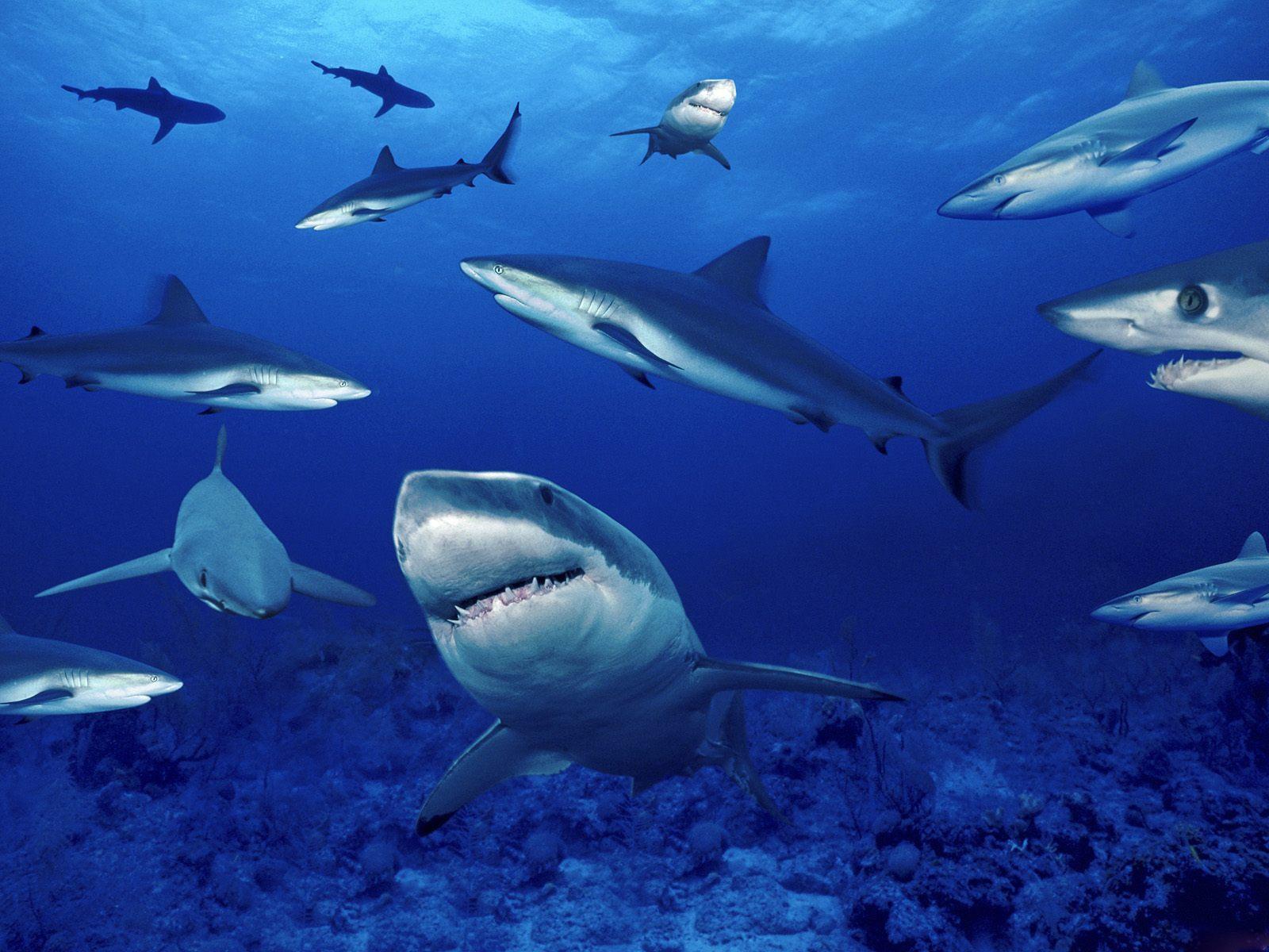 http://1.bp.blogspot.com/-TdtRc6c4xPw/TkrUKF4drQI/AAAAAAAALlM/Rv2kZowEaGw/s1600/Underwater+Wallpapers+%252831%2529.jpg