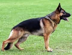 اسعار الكلاب 2019 لجميع الأنواع 3.jpeg