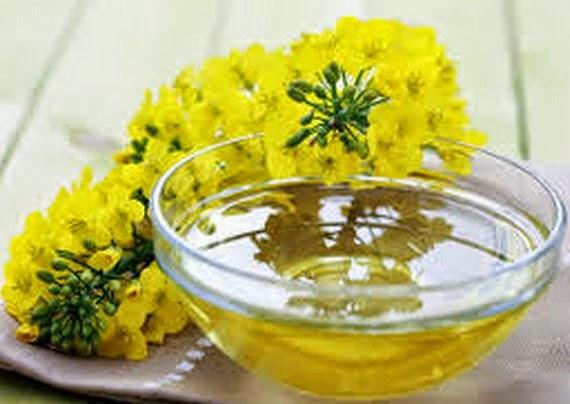 Khasiat minyak dari biji Canola