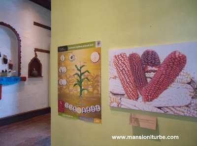 Sweetcorn in the Purépecha Región at the Museum in Patzcuaro