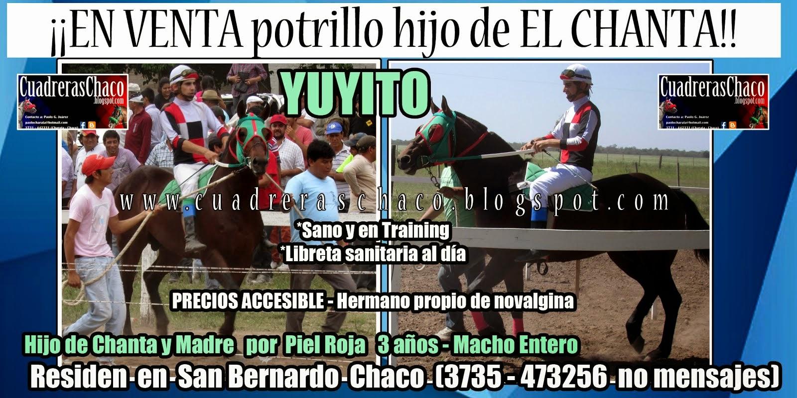 VENTA YUYITO 14-11-14