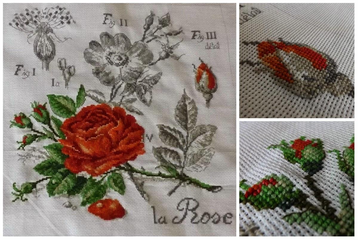 Вышивка розы ботаника