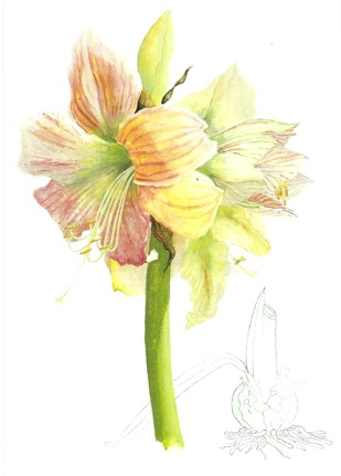 Central Virginia Botanical Artists Spotlight On Judy