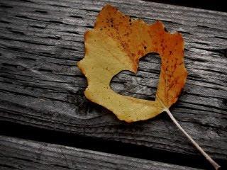 Urezano srce u listu, jesen download besplatne pozadine slike za mobitele