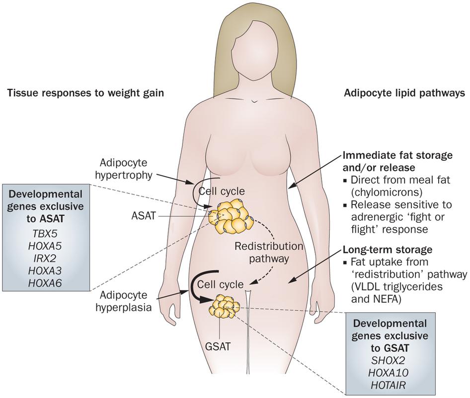 нормальный уровень холестерина в крови мужчин