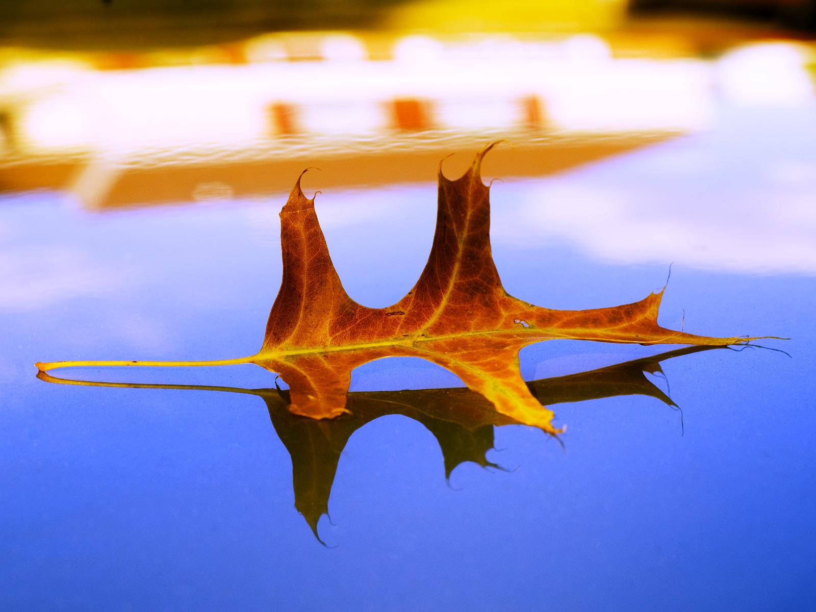 The best top autumn desktop wallpapers 14 En Güzel Sonbahar HD Duvar Kağıtları
