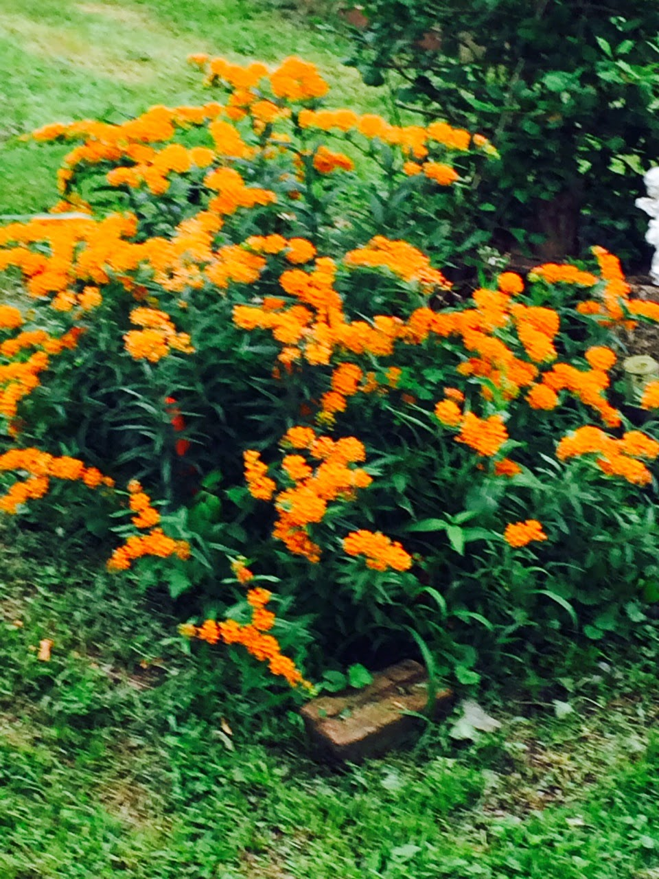 Garden Delights Plant Nursery Blog August 2014
