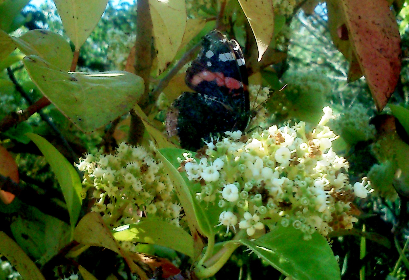 Arte ciencia de david jos flores for Jardin umbrio