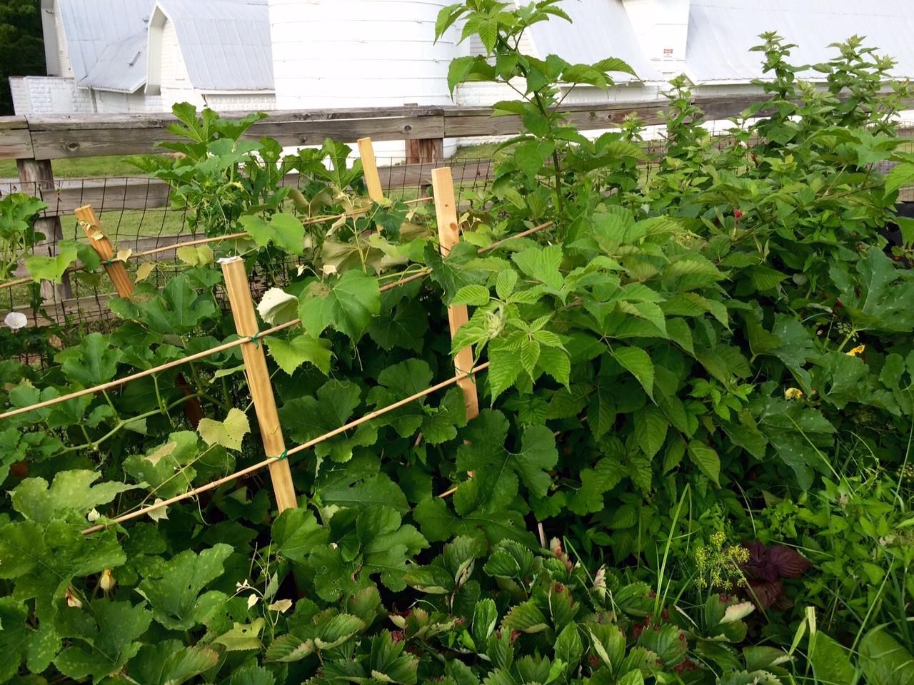 backyard garden a virtual tour the homestead hobbyist