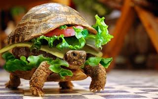 Imagem de uma tartaruga clique diveros