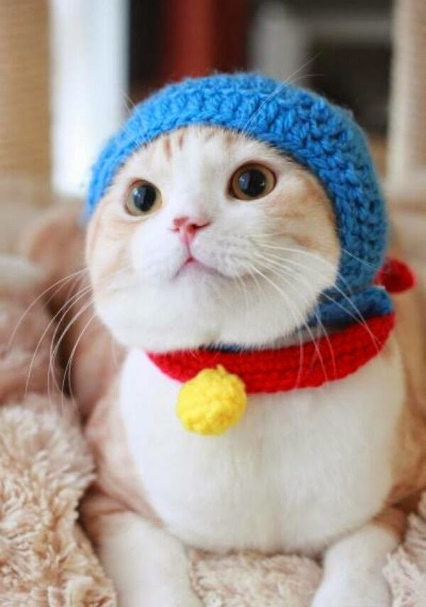 Funny cats - part 99 (40 pics + 10 gifs), cat pictures, cat wears knit hat