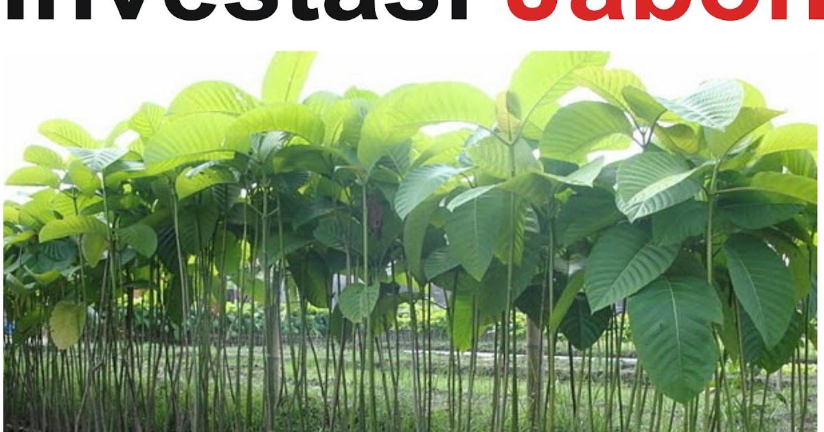 Investasi Jabon Anjar Gigih Dewanto
