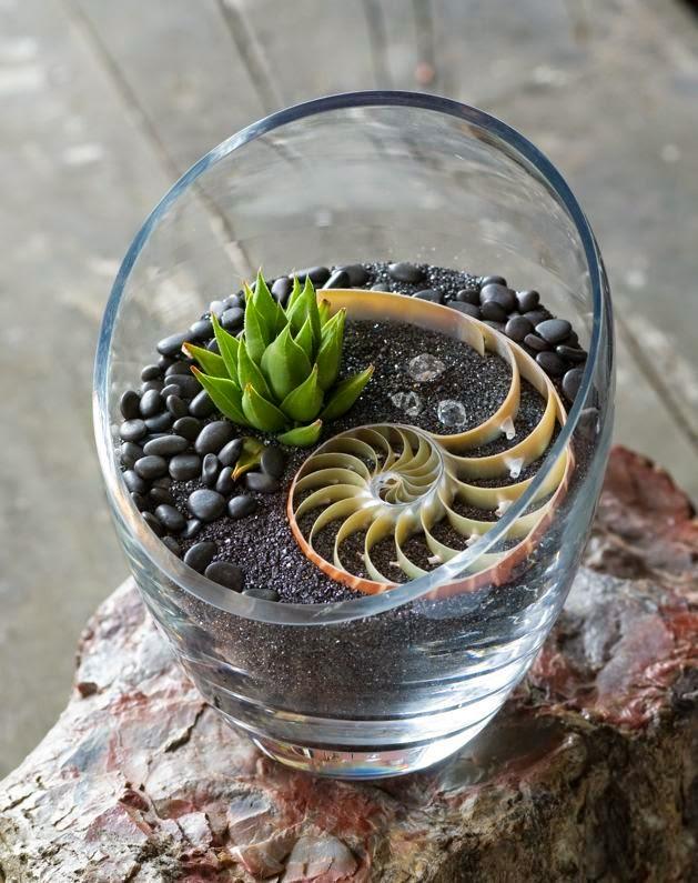 Ciao newport beach interesting terrariums - Cool succulent plants ...