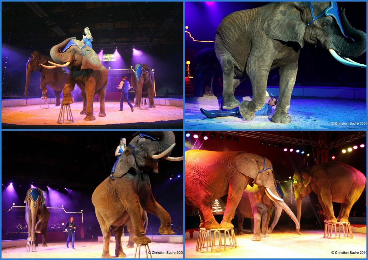 recruitment and selection in cirque du Consider cirque du soleil this is how cirque du soleil reinvented the circus written by ren e mauborgne professor, insead & w chan kim professor, insead march 20, 2015 (reuters/sergio moraes) share written by.