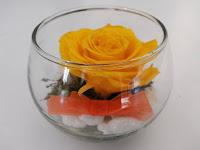 Rosas Amarillas Naturales Preservadas ¡Duran 4 Años! Santa Ana, El Salvador
