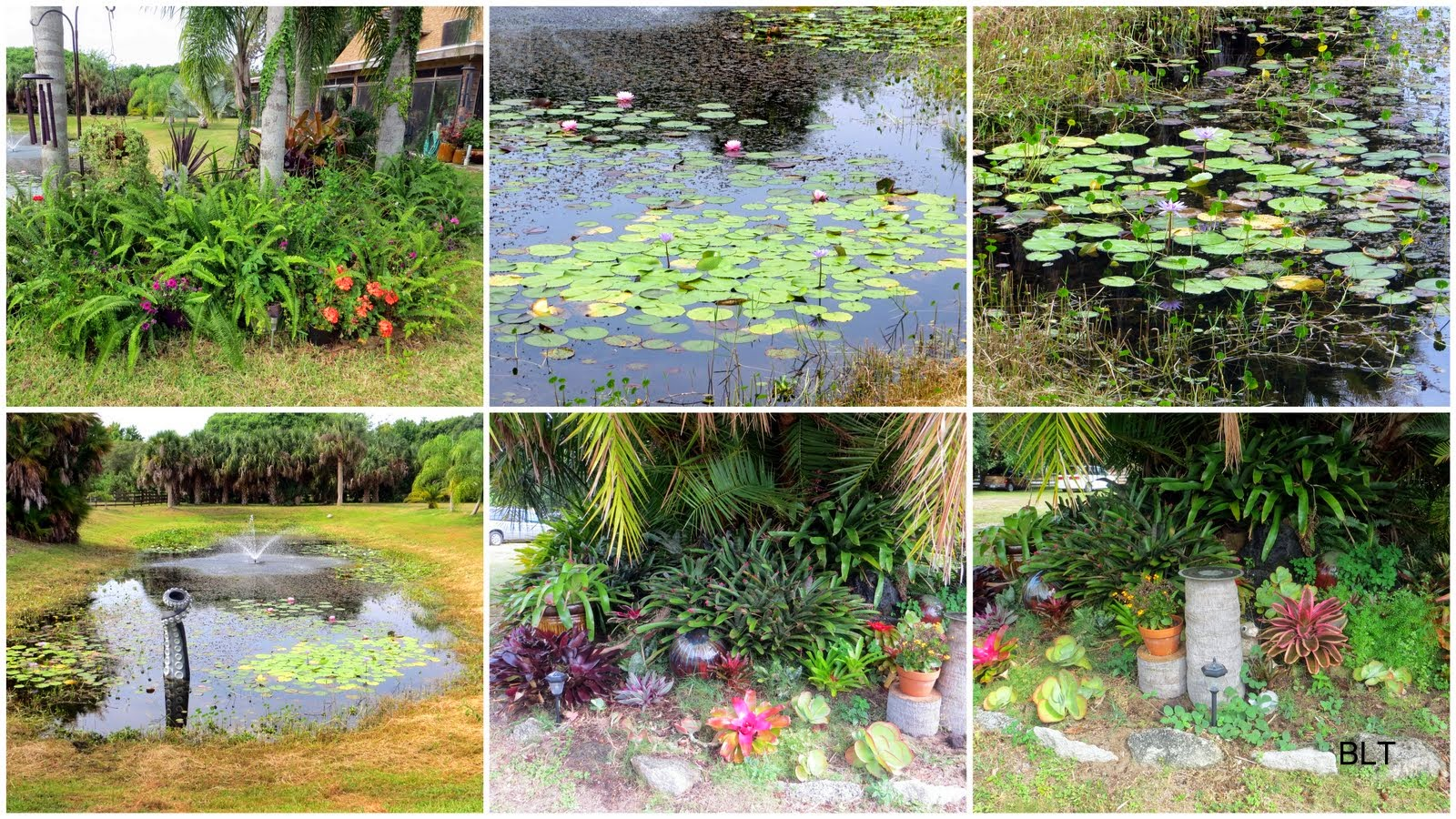 Bob and linda 39 s rv travels flower garden and pond tour for Flower garden ponds