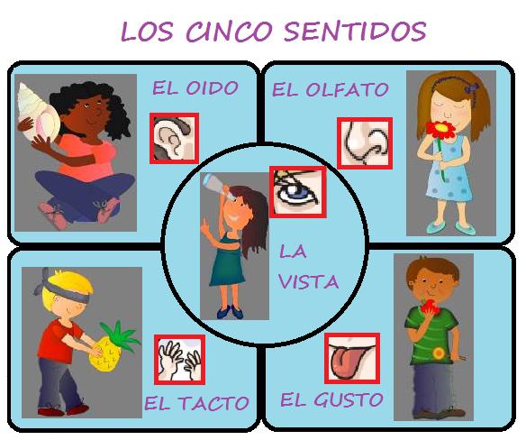 Los 5 sentidos para niños de preescolar - Imagui