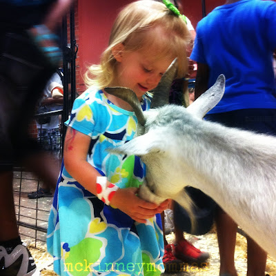 Girl Feeding Goats at Petting Zoo