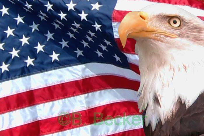 103194-American-Flag-and-Eagle_view.jpg