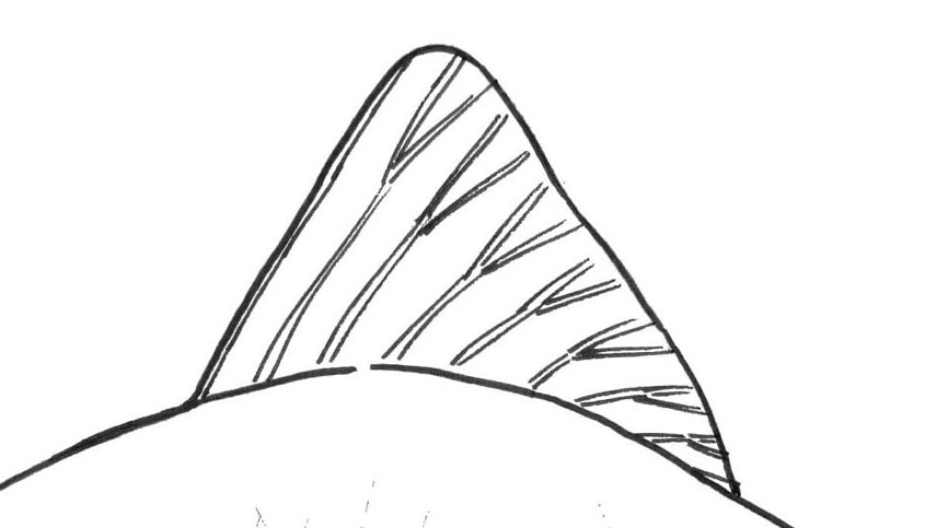 fish fin drawing